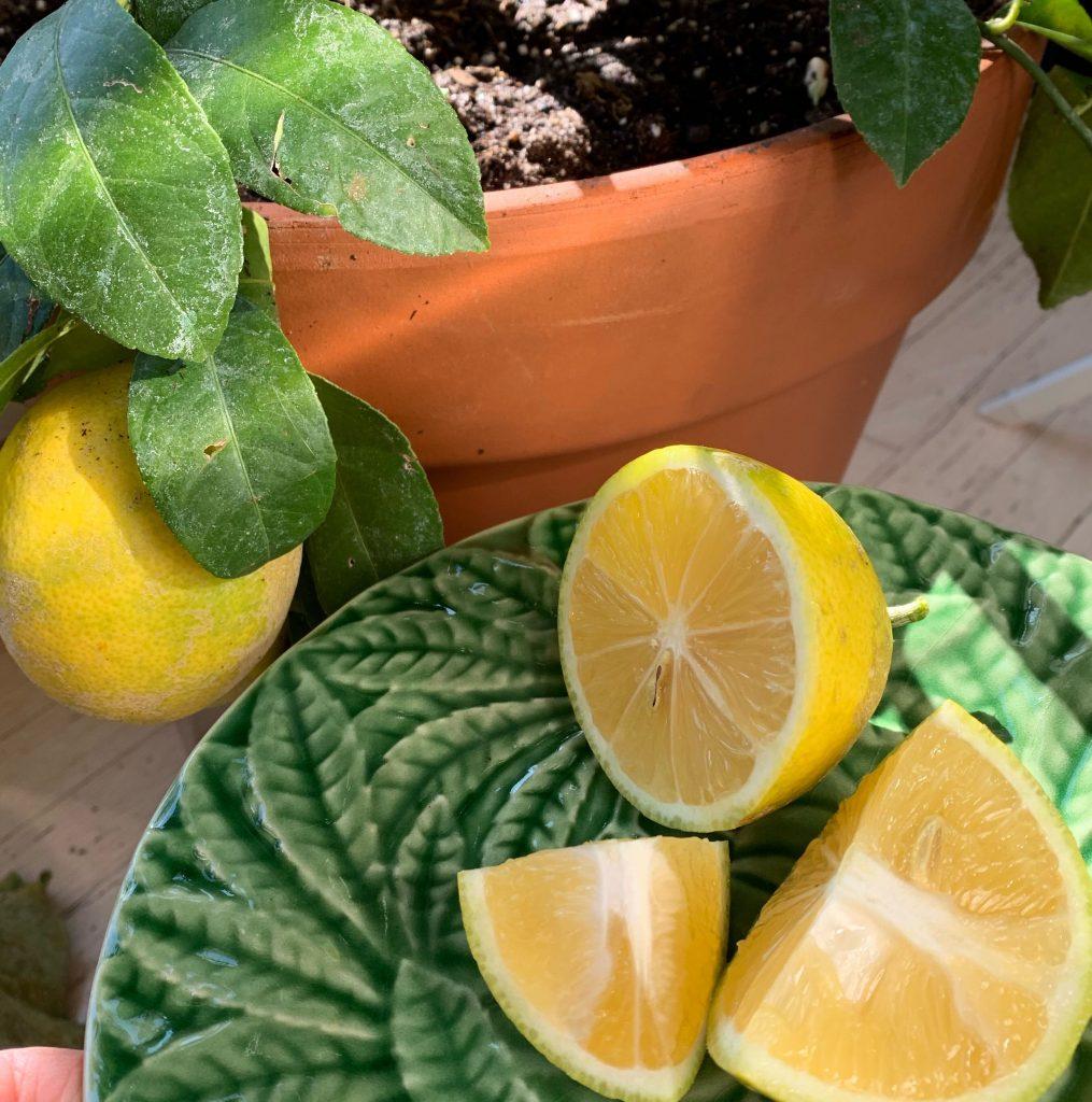 Fresh Lemon grown Inside