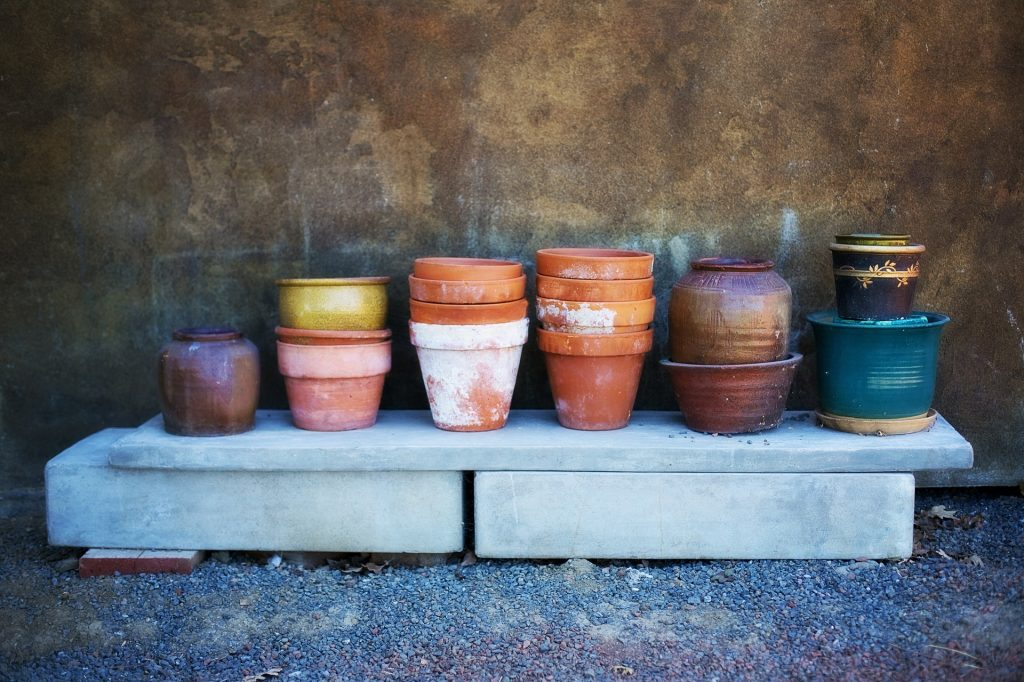 Perfect Pots for growing a citrus tree