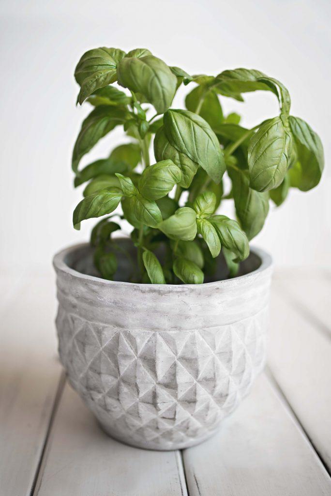 Kitchen Herb Garden Basil